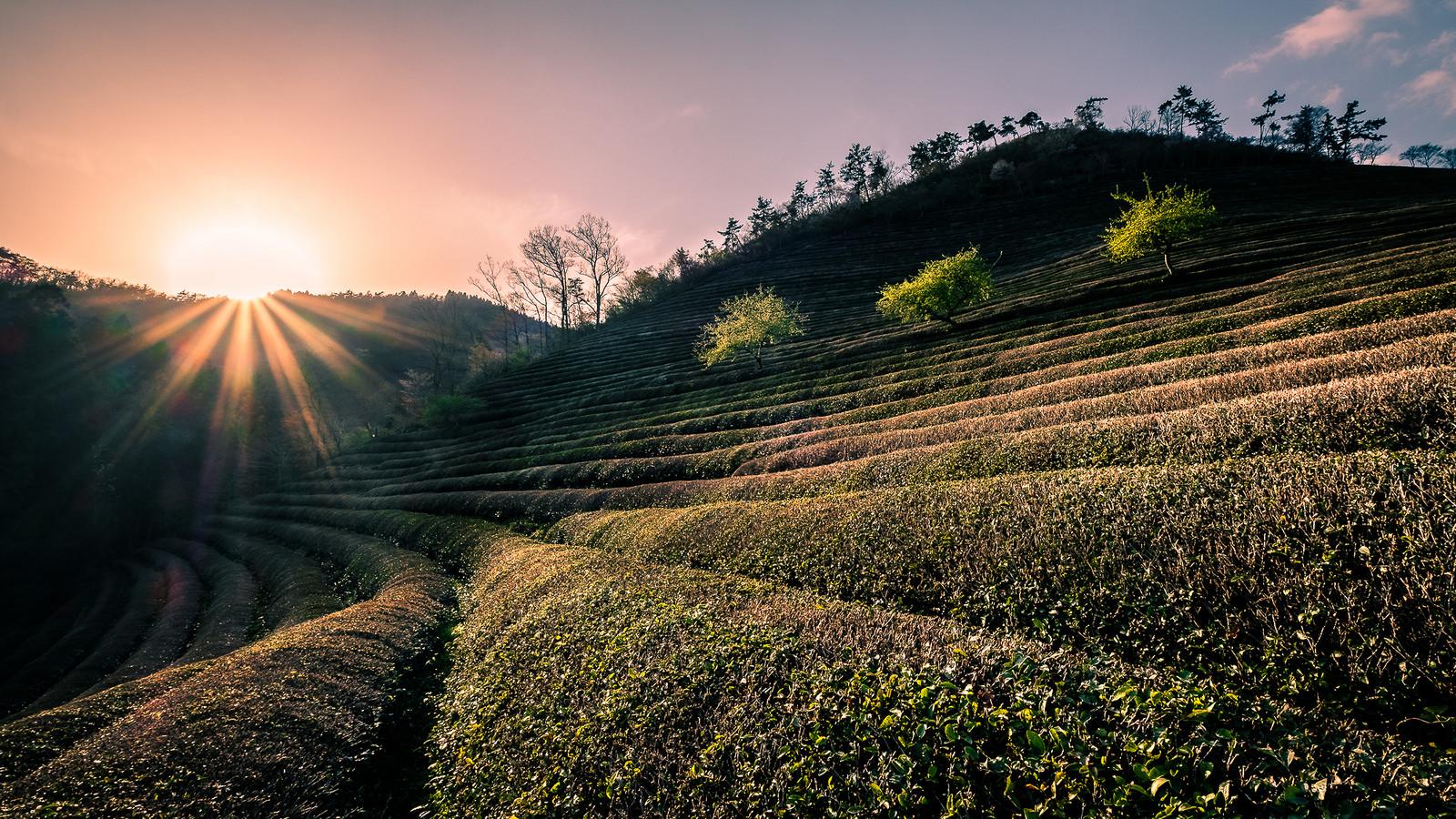 Eating Korea, deel 4: het zuidwesten van Zuid-Korea